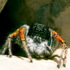 Паукообразные Центральной Азии | Arachnida of the Central Asia icon