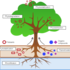 Phytoremediation Project ENVR 1402 icon