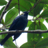 Aves en el Putumayo icon