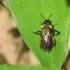 Bugs of Iowa icon