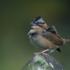 Aves Del Valle de Aburrá - Colombia icon