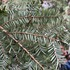 Save the Alabama Hemlocks icon