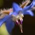 Alentejo - Fauna & Flora icon