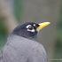Aves del Estado de Tlaxcala icon