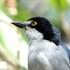 Aves de Rio Claro, SP icon