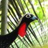 Aves do Estado de São Paulo icon