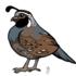 Joshua Tree Birds icon