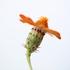 Flora UABCS icon