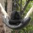 Changing Wildlife Tourism in Peru icon
