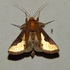 Moths of Zimbabwe icon