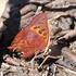 Butterflies of Zimbabwe icon
