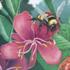 Victoria Plants and Pollinators icon