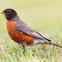 I.E. Official songbird bioblitz (wk2may) icon