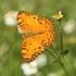 Butterflies of Paulpietersburg, KZN icon