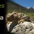 Reptiles of Nevada icon