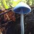 Fungi of ZEALANDIA icon