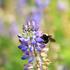 City Nature Challenge 2020: Mendocino County icon