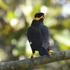 Birds of Chhattisgarh icon