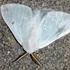 Farfalle e falene di Puglia icon