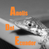 Anolis del Ecuador icon