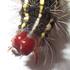 Leucaloa eugraphica caterpillar rearing. Gaborone BW icon
