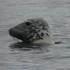 Somerset & Exmoor Marine Mammals icon