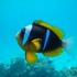Fishes of Zanzibar icon