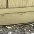 Reptiles of the Napa Valley area icon
