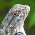 Reptiles de Guanajuato icon
