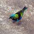 Parana Birds icon