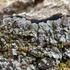 Atlantic Canada Lichens  - 2020 Collection Project icon