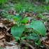 CWT Botanika 2020 gr 1 icon