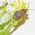 Arthropoda of Southern Patagonia icon