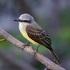 Aves de Panamá Pacífico icon