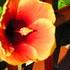 Bioblitz: Día Mundial de la Biodiversidad 2020: Comarca Kuna Yala icon