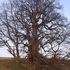 Významné stromy icon