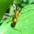 台灣螞蟻觀察 Taiwan Ants icon