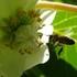 i9K Bees icon
