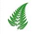 Ferns of Rwanda icon