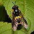 West Lancashire Borough Biodiversity Recording icon