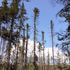 2020 Vermont Wetland Bioassessment icon