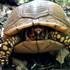 LLELA Box Turtle Project icon
