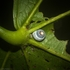 Rotary Park Rainforest Reserve, Lismore NSW AU icon