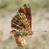 Lepidoptera of Ukraine icon