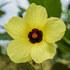 KUNHM Botanical Blitz icon