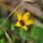 Pollinator Associations icon