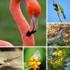 Biodiversidad en la Península de Yucatán icon