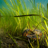 EAC Eelgrass Monitoring Project icon