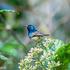 Birds Of Madagascar icon