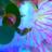 8170 icon thumb